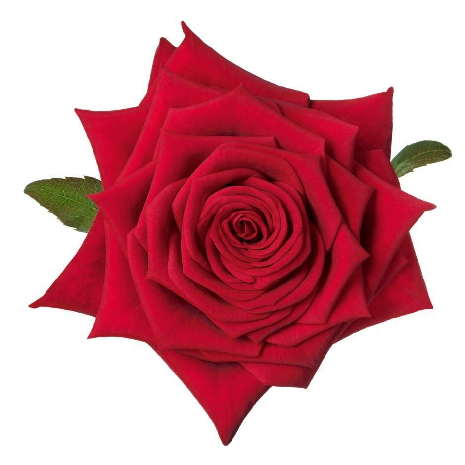 "Valentine: Schreurs loves Red Naomi! # ""Command Cupid"""