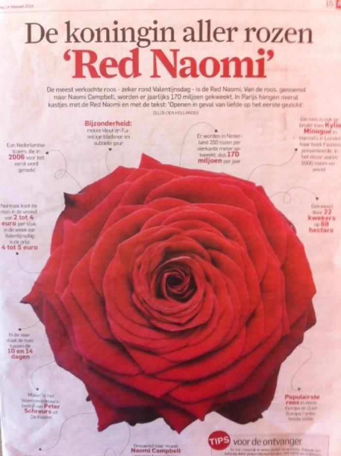 De koningin aller rozen 'Red Naomi!'