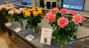Rose varieties at Hoven &  de Mooij